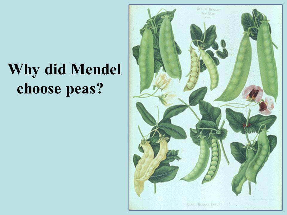 Mendels Peas
