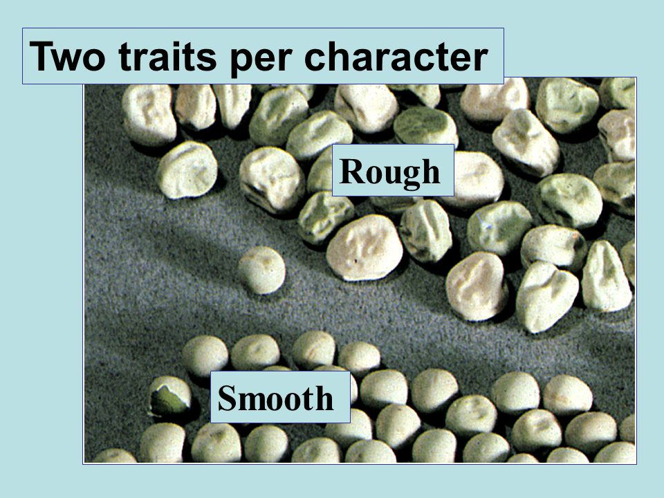 Two traits per character Rough Smooth