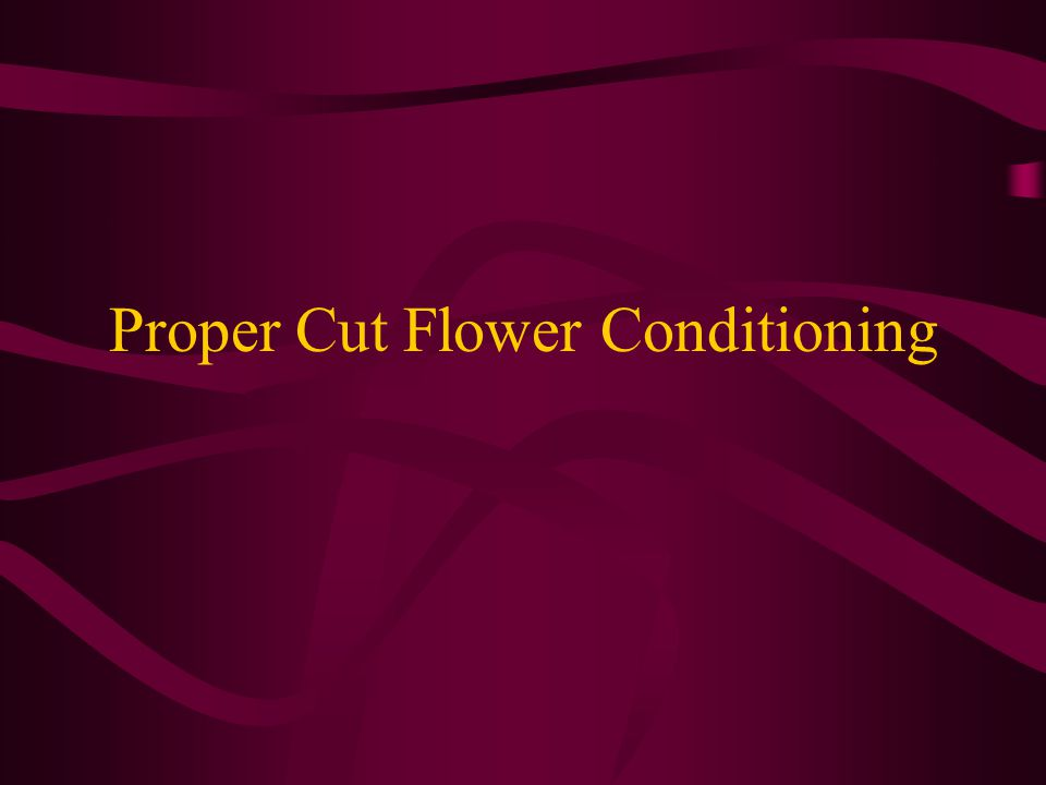 Proper Cut Flower Conditioning