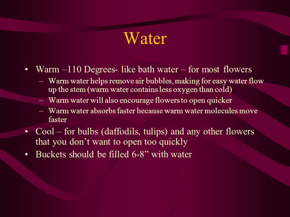 Water Warm –110 Degrees- like bath water – for most flowers –Warm water helps remove air bubbles, making for easy water flow up the stem (warm water contains less oxygen than cold) –Warm water will also encourage flowers to open quicker –Warm water absorbs faster because warm water molecules move faster Cool – for bulbs (daffodils, tulips) and any other flowers that you dont want to open too quickly Buckets should be filled 6-8 with water