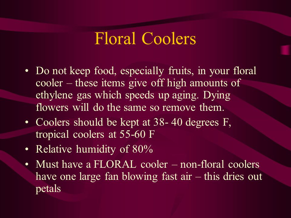 Floral Coolers Do not keep food, especially fruits, in your floral cooler – these items give off high amounts of ethylene gas which speeds up aging.