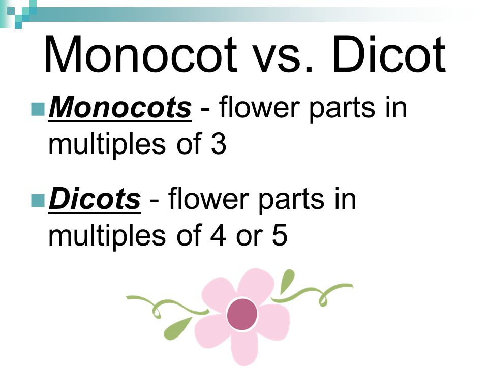 Monocot vs. Dicot Monocots - flower parts in multiples of 3 Dicots - flower parts in multiples of 4 or 5