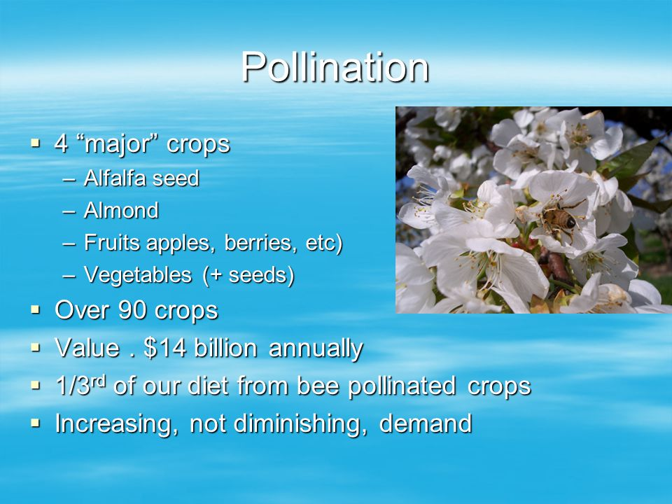 Pollination 4 major crops 4 major crops –Alfalfa seed –Almond –Fruits apples, berries, etc) –Vegetables (+ seeds) Over 90 crops Over 90 crops Value.