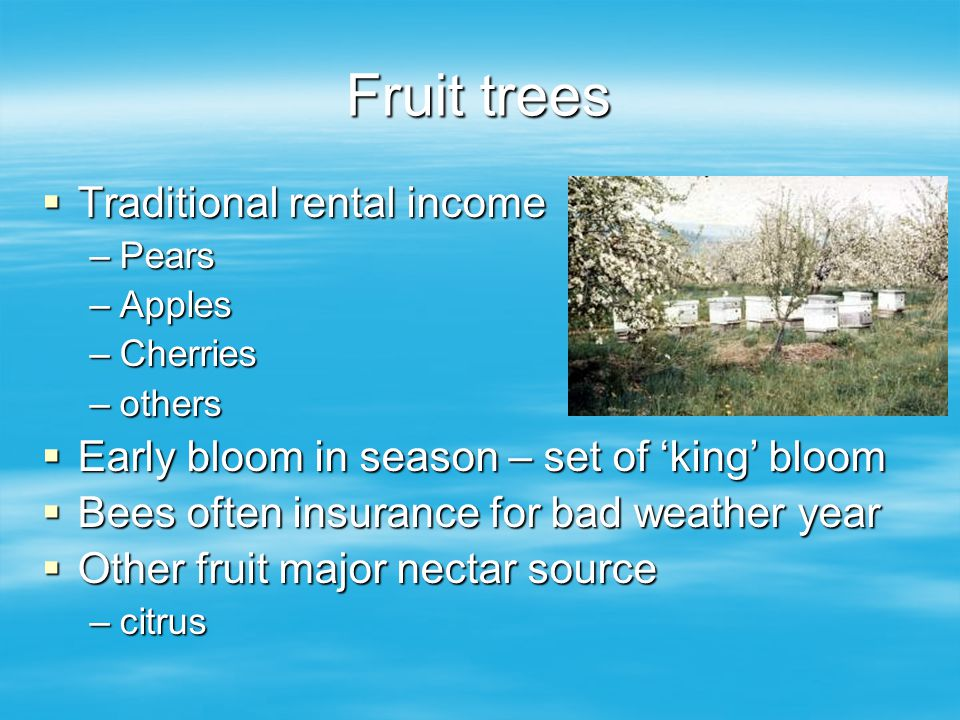 Fruit trees Traditional rental income Traditional rental income –Pears –Apples –Cherries –others Early bloom in season – set of king bloom Early bloom in season – set of king bloom Bees often insurance for bad weather year Bees often insurance for bad weather year Other fruit major nectar source Other fruit major nectar source –citrus