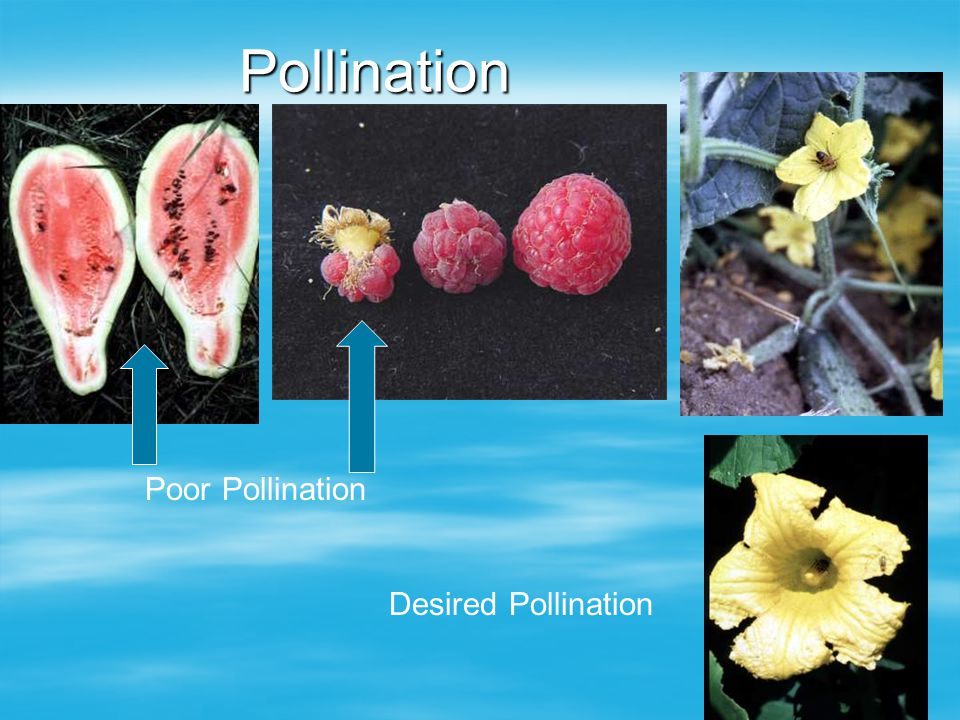 Pollination Poor Pollination Desired Pollination