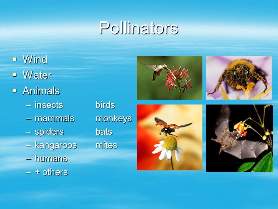 Pollinators Wind Wind Water Water Animals Animals –insectsbirds –mammalsmonkeys –spidersbats –kangaroosmites –humans –+ others