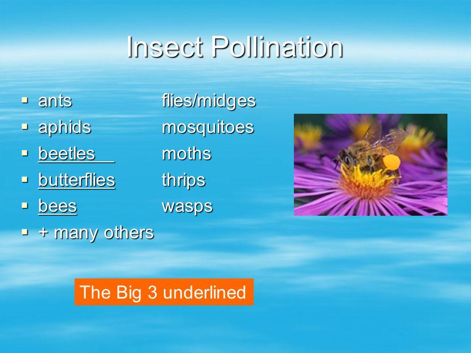 Insect Pollination antsflies/midges antsflies/midges aphidsmosquitoes aphidsmosquitoes beetlesmoths beetlesmoths butterfliesthrips butterfliesthrips beeswasps beeswasps + many others + many others The Big 3 underlined