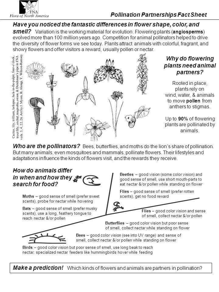 Pollination Partnerships Fact Sheet Who are the pollinators? Bees, butterflies, and moths do the lions share of pollination. But many animals, even mo