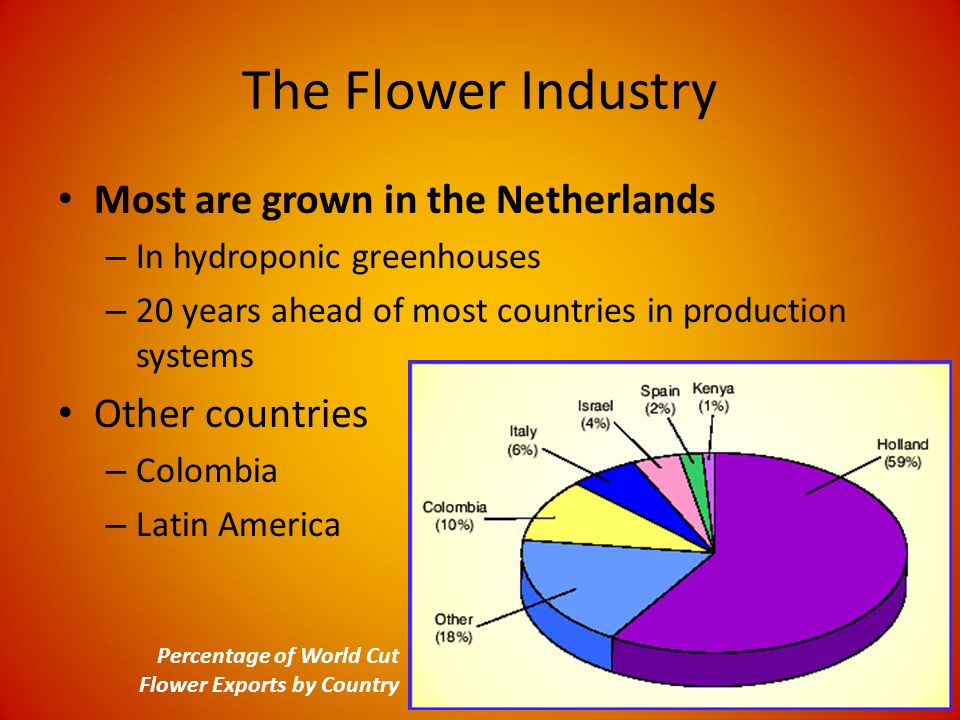 The Flower Industry Most are grown in the Netherlands – In hydroponic greenhouses – 20 years ahead of most countries in production systems Other countries – Colombia – Latin America Percentage of World Cut Flower Exports by Country