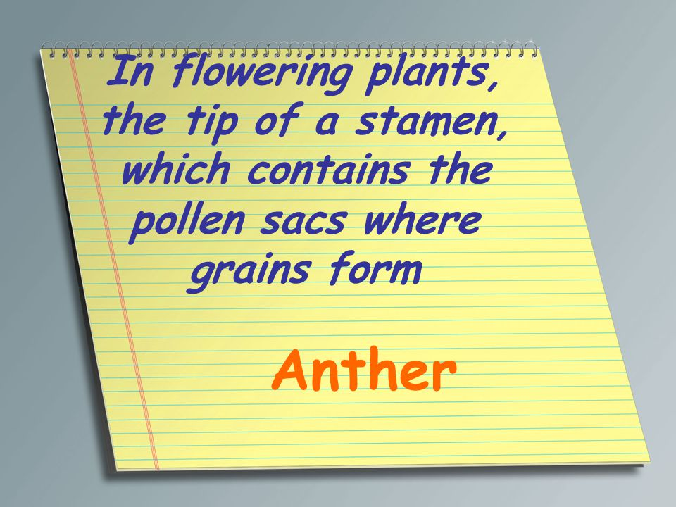 In flowering plants, the tip of a stamen, which contains the pollen sacs where grains form Anther