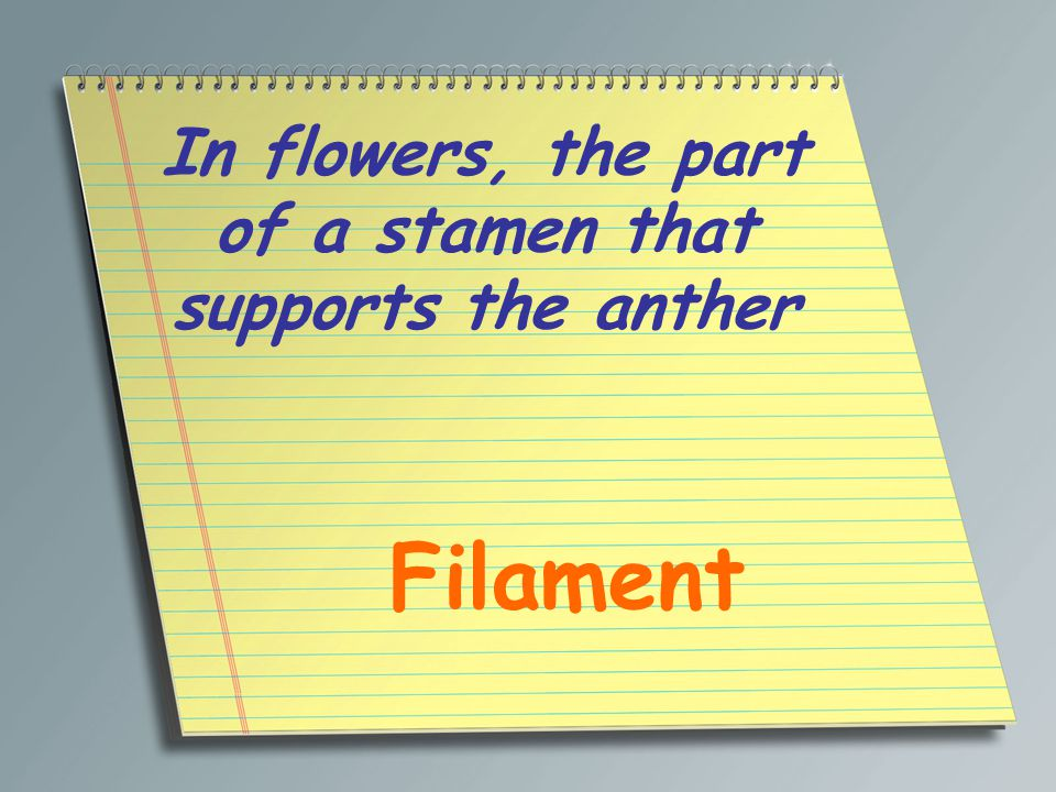 In flowers, the part of a stamen that supports the anther Filament
