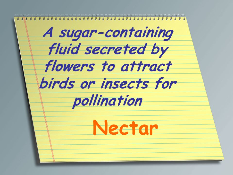 A sugar-containing fluid secreted by flowers to attract birds or insects for pollination Nectar
