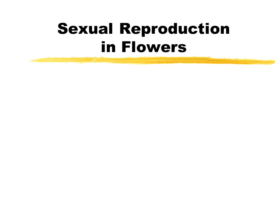 Sexual Reproduction in Flowers