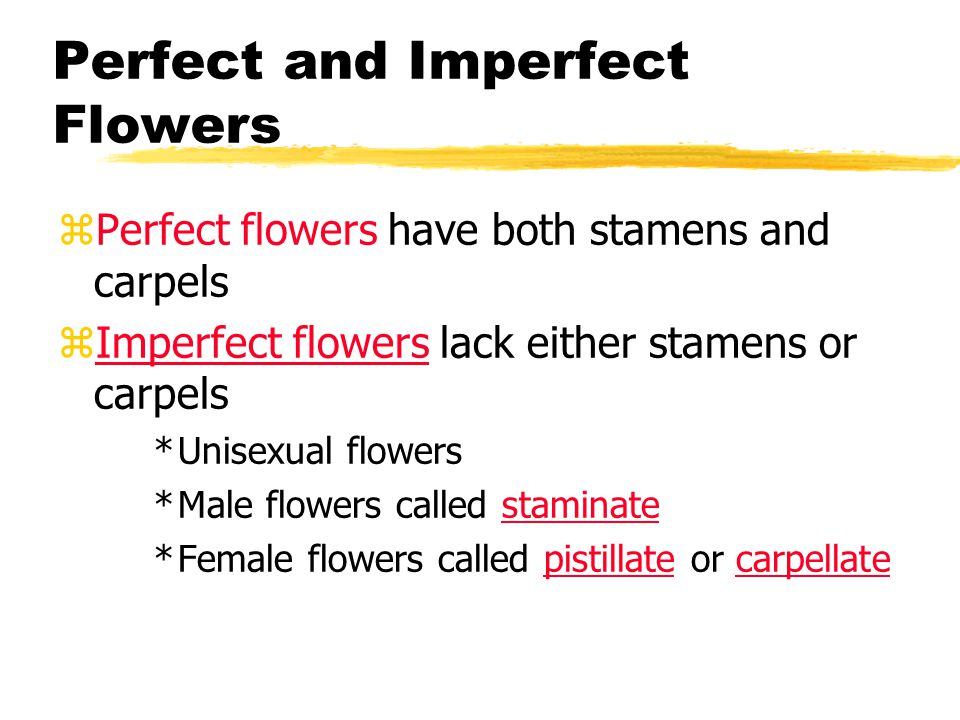 Perfect and Imperfect Flowers zPerfect flowers have both stamens and carpels zImperfect flowers lack either stamens or carpels *Unisexual flowers *Mal