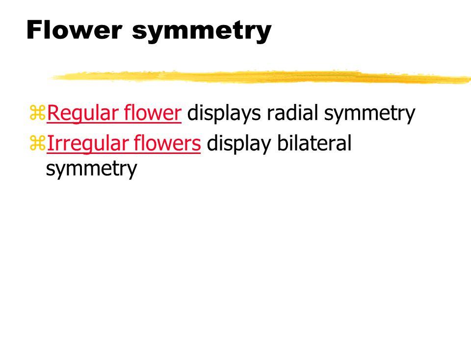 Flower symmetry zRegular flower displays radial symmetry zIrregular flowers display bilateral symmetry