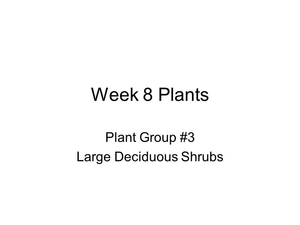 Week 8 Plants Plant Group #3 Large Deciduous Shrubs