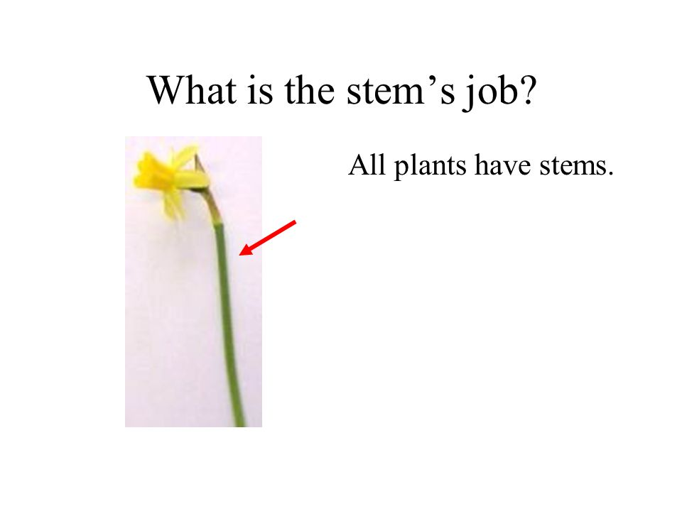 Why do plants have roots? All plants with flowers have roots. The roots grow down into the soil. Roots help the plant stand up. Roots stop the wind bl