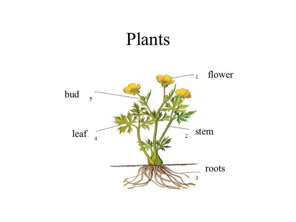 Plants www.schooltrain.info Wendy Pallant