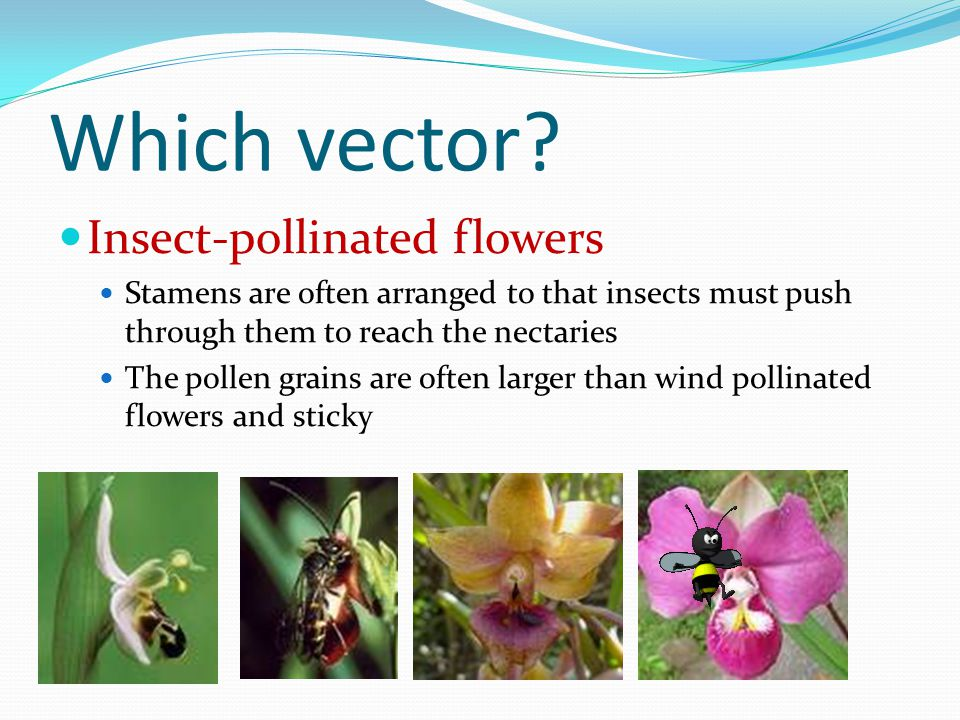 Which vector.