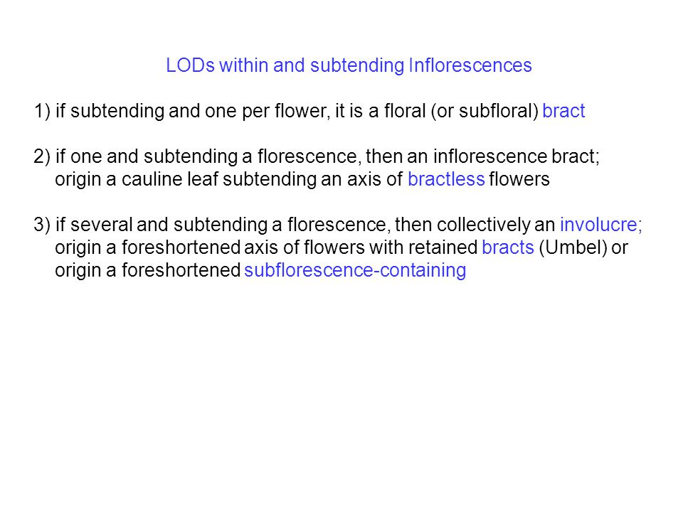 LODs within and subtending Inflorescences 1) if subtending and one per flower, it is a floral (or subfloral) bract 2) if one and subtending a florescence, then an inflorescence bract; origin a cauline leaf subtending an axis of bractless flowers 3) if several and subtending a florescence, then collectively an involucre; origin a foreshortened axis of flowers with retained bracts (Umbel) or origin a foreshortened subflorescence-containing