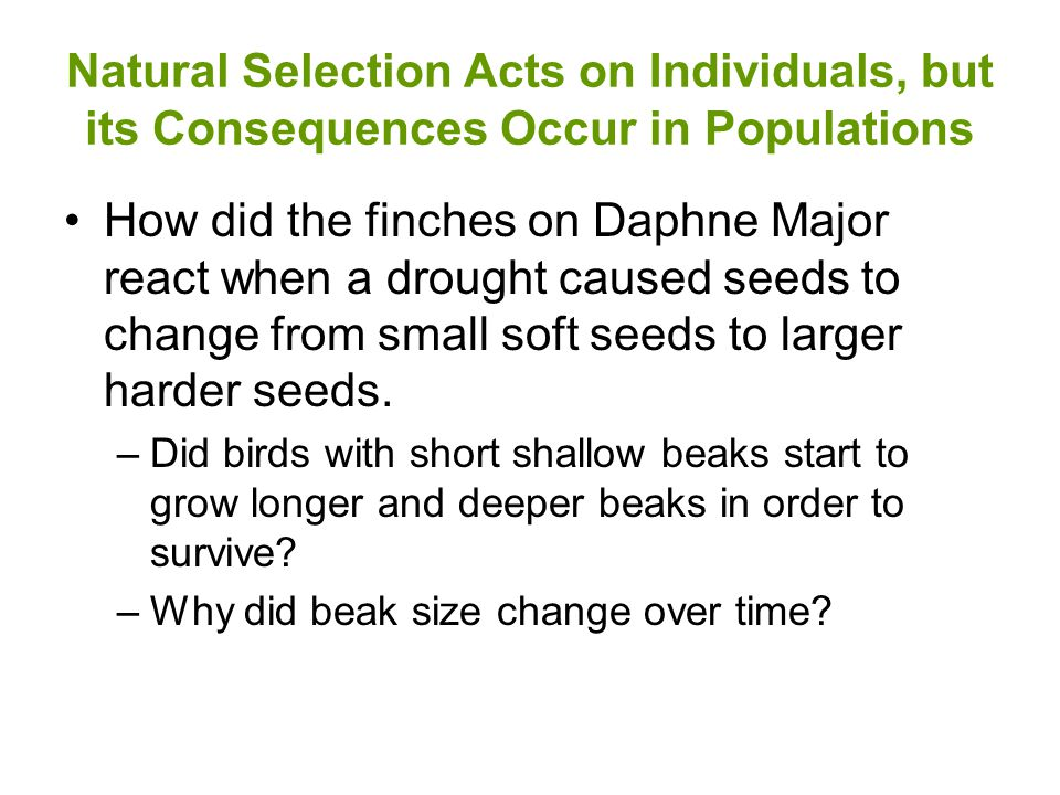 Natural Selection Acts on Individuals, but its Consequences Occur in Populations How did the finches on Daphne Major react when a drought caused seeds to change from small soft seeds to larger harder seeds.