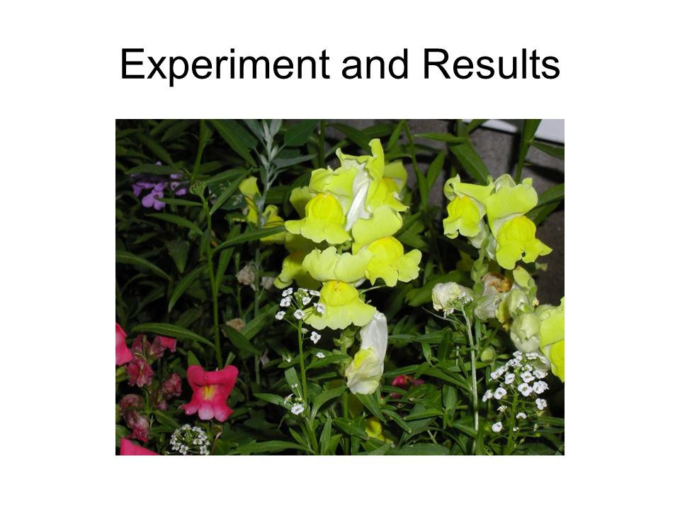 Experiment and Results