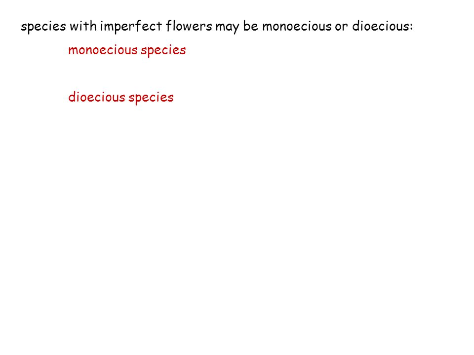 species with imperfect flowers may be monoecious or dioecious: monoecious species dioecious species