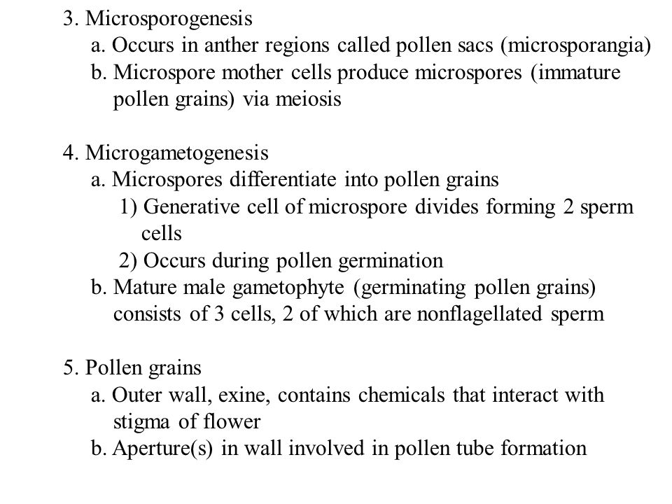 3. Microsporogenesis a. Occurs in anther regions called pollen sacs (microsporangia) b. Microspore mother cells produce microspores (immature pollen g