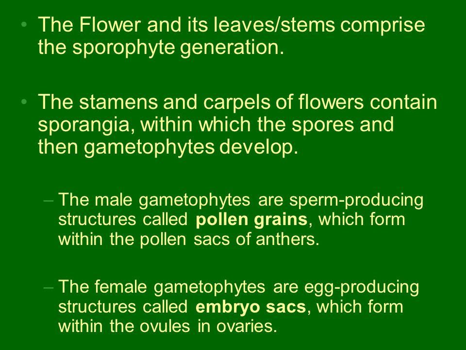 The development of angiosperm gametophytes involves meiosis and mitosis.