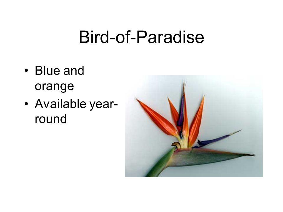 Bird-of-Paradise Blue and orange Available year- round