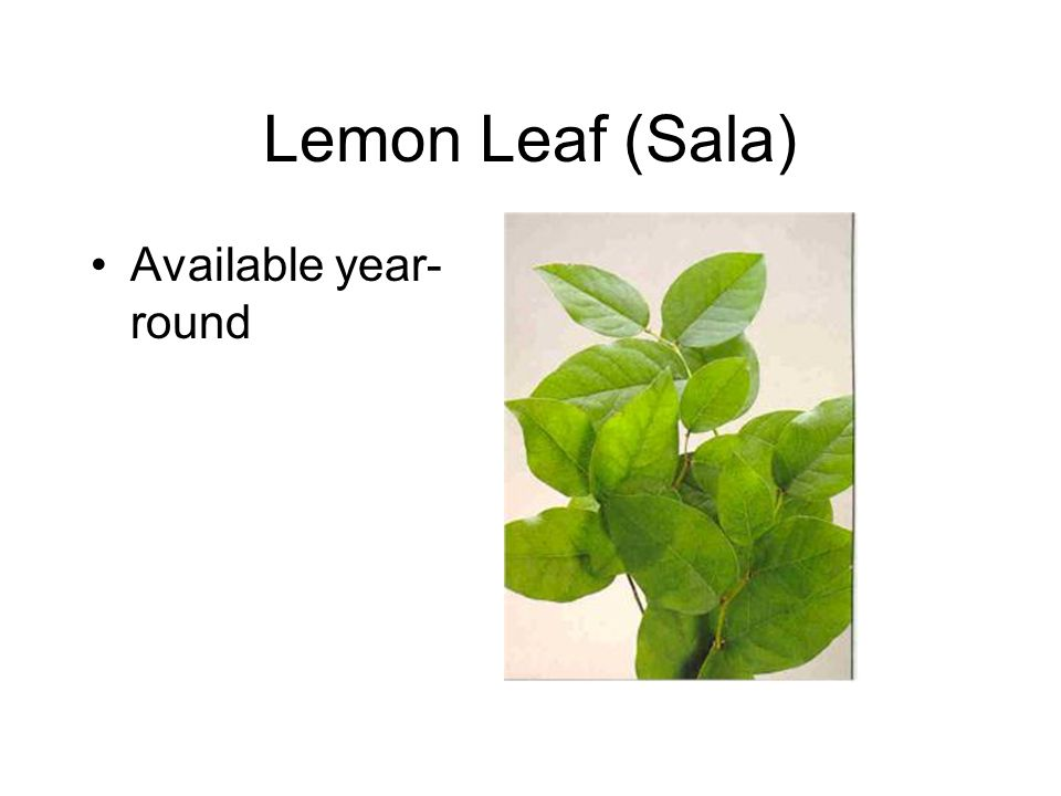 Lemon Leaf (Sala) Available year- round