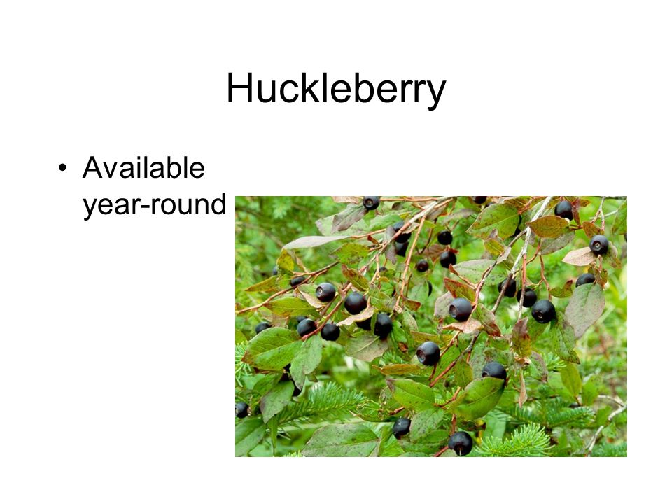 Huckleberry Available year-round