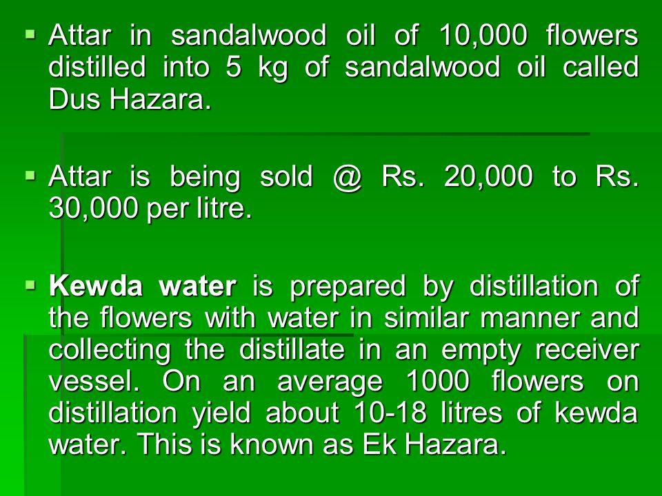 Attar in sandalwood oil of 10,000 flowers distilled into 5 kg of sandalwood oil called Dus Hazara. Attar in sandalwood oil of 10,000 flowers distilled