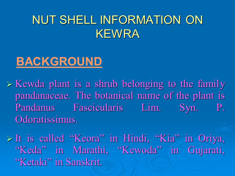 NUT SHELL INFORMATION ON KEWRA Kewda plant is a shrub belonging to the family pandanaceae. The botanical name of the plant is Pandanus Fascicularis Li