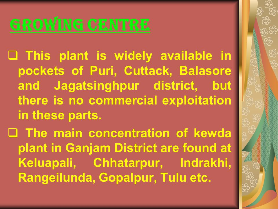 GROWING CENTRE This plant is widely available in pockets of Puri, Cuttack, Balasore and Jagatsinghpur district, but there is no commercial exploitatio