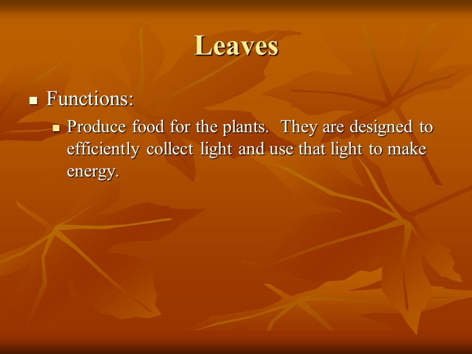 Leaves Functions: Functions: Produce food for the plants. They are designed to efficiently collect light and use that light to make energy. Produce fo