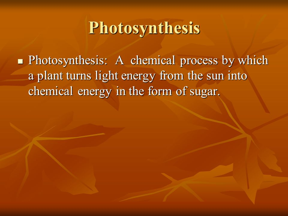 Photosynthesis Photosynthesis: A chemical process by which a plant turns light energy from the sun into chemical energy in the form of sugar. Photosyn