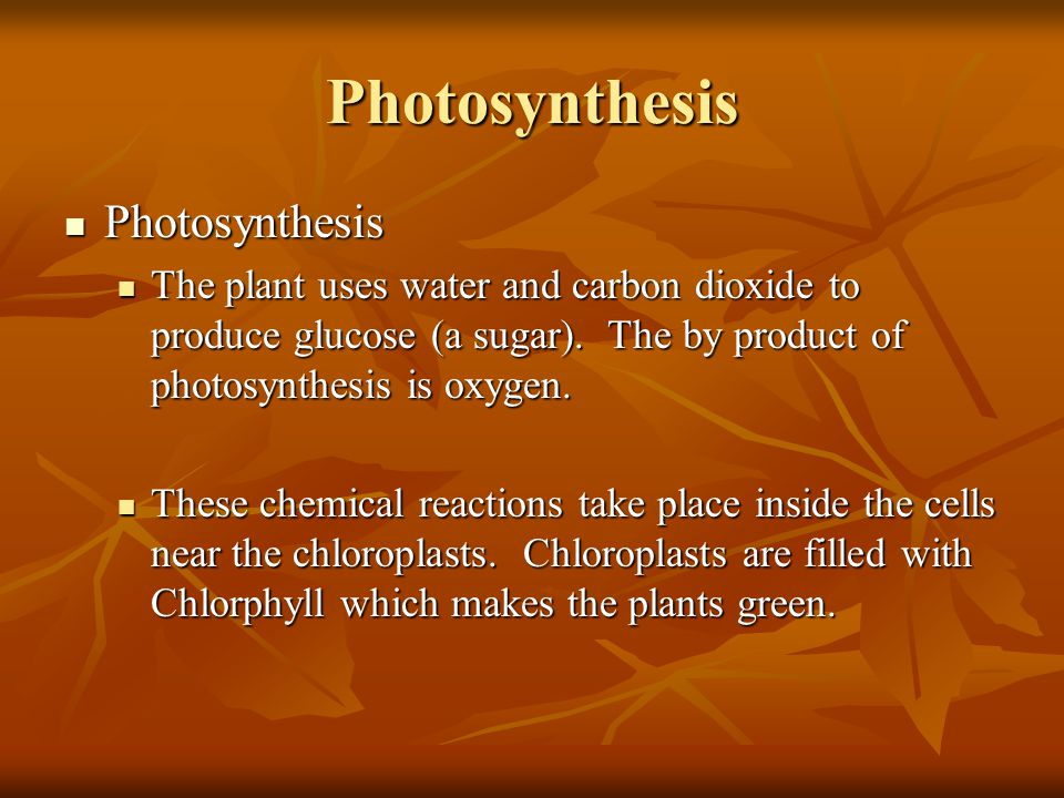 Photosynthesis Photosynthesis Photosynthesis The plant uses water and carbon dioxide to produce glucose (a sugar). The by product of photosynthesis is