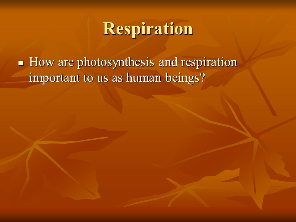 Respiration How are photosynthesis and respiration important to us as human beings? How are photosynthesis and respiration important to us as human be