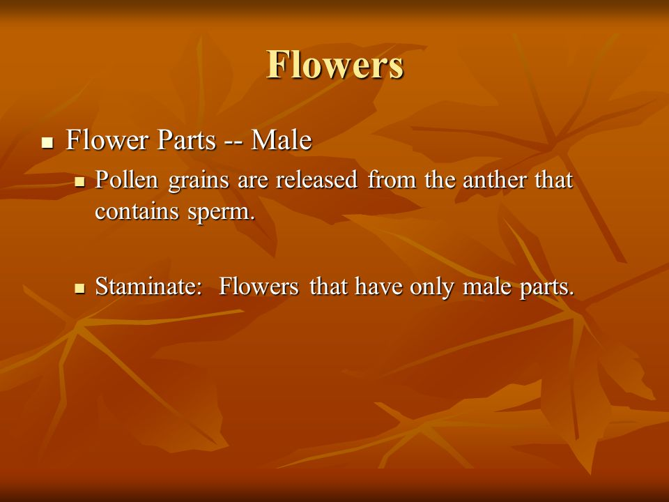 Flowers Flower Parts -- Male Flower Parts -- Male Pollen grains are released from the anther that contains sperm. Pollen grains are released from the