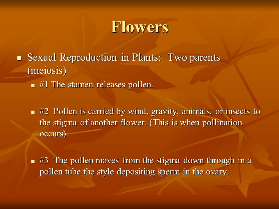 Flowers Sexual Reproduction in Plants: Two parents (meiosis) Sexual Reproduction in Plants: Two parents (meiosis) #1 The stamen releases pollen. #1 Th