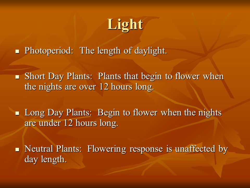 Light Photoperiod: The length of daylight. Photoperiod: The length of daylight. Short Day Plants: Plants that begin to flower when the nights are over