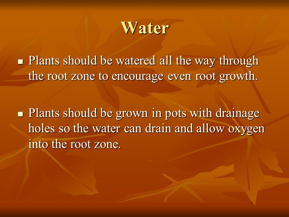 Water Plants should be watered all the way through the root zone to encourage even root growth. Plants should be watered all the way through the root