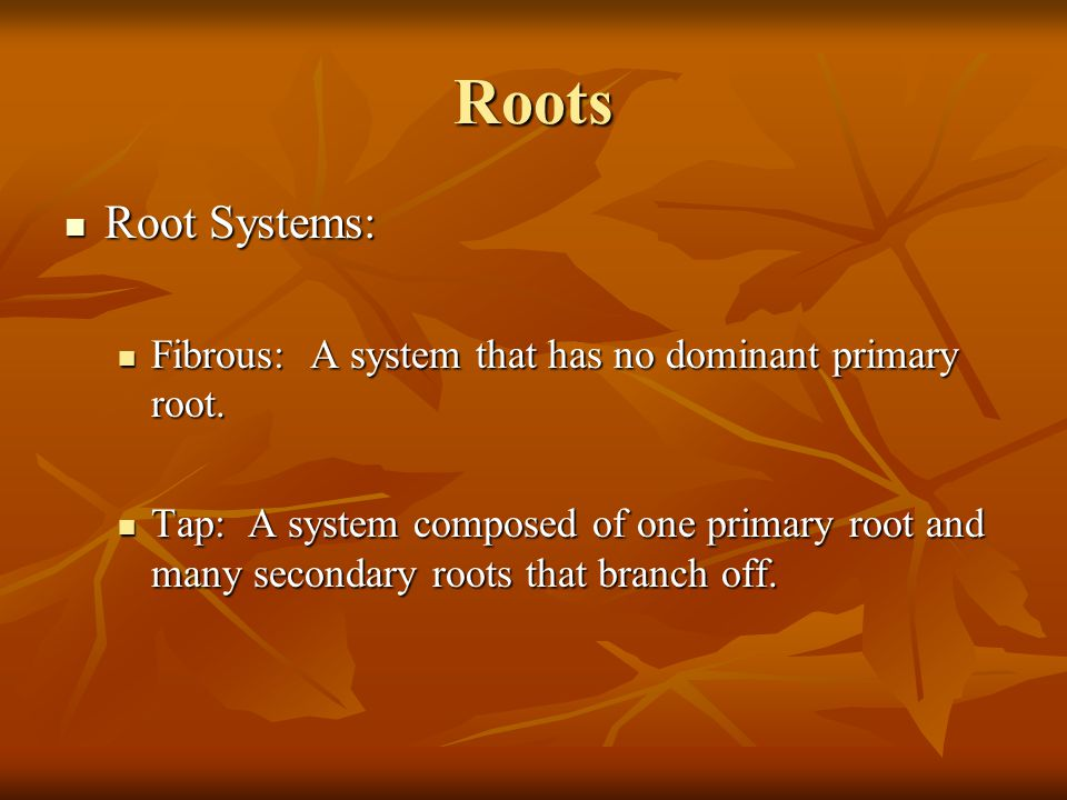 Roots Root Systems: Root Systems: Fibrous: A system that has no dominant primary root. Fibrous: A system that has no dominant primary root. Tap: A sys