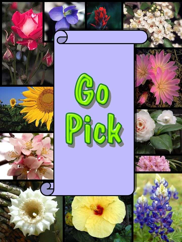Play Go Pick the same as Go Fish The object of the game is to match a pair of State Flowers