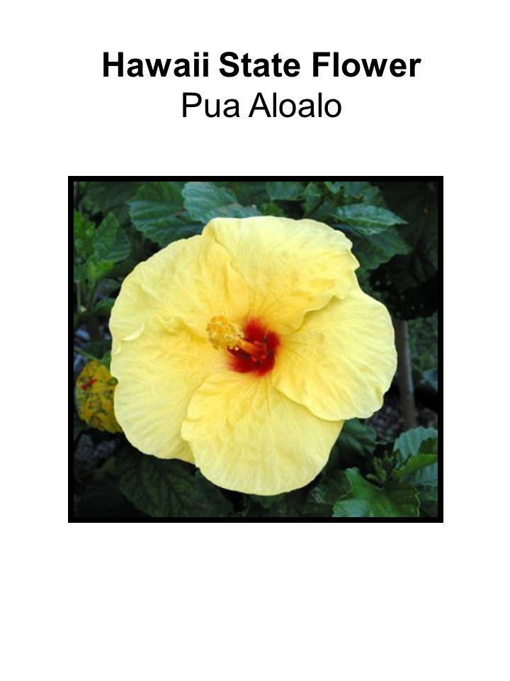 Hawaii State Flower Pua Aloalo
