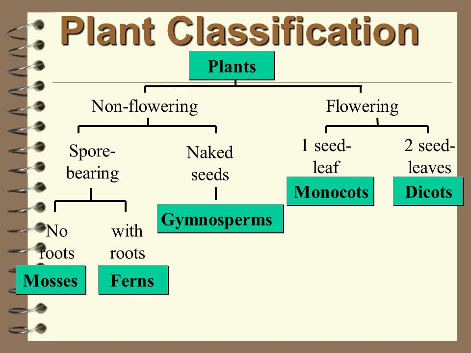 . two seed-leaves Characteristics of Dicotyledons. leaves have veins in network. e.g. trees, sunflower, rose