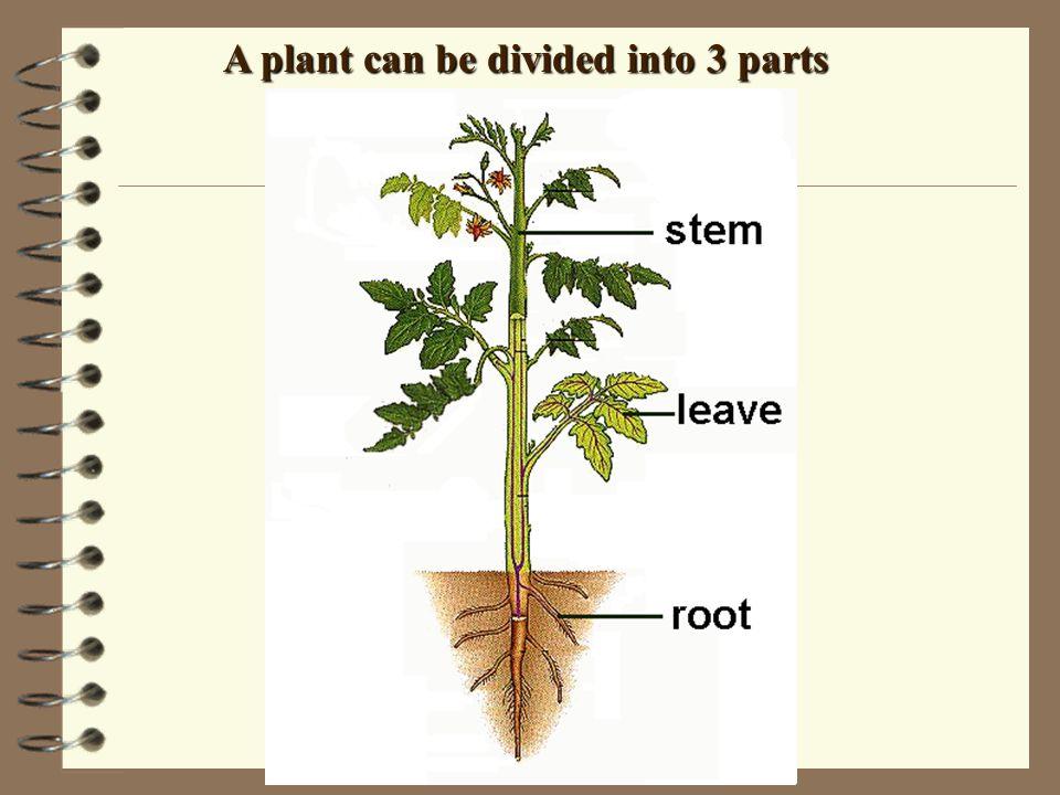 . 3 groups FernsMossesGymnosperms Non - flowering Plants Do NOT produce flowers