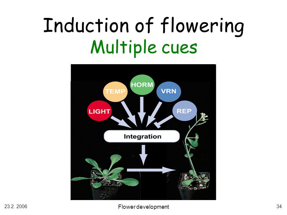 23.2. 2006 Flower development 34 Induction of flowering Multiple cues