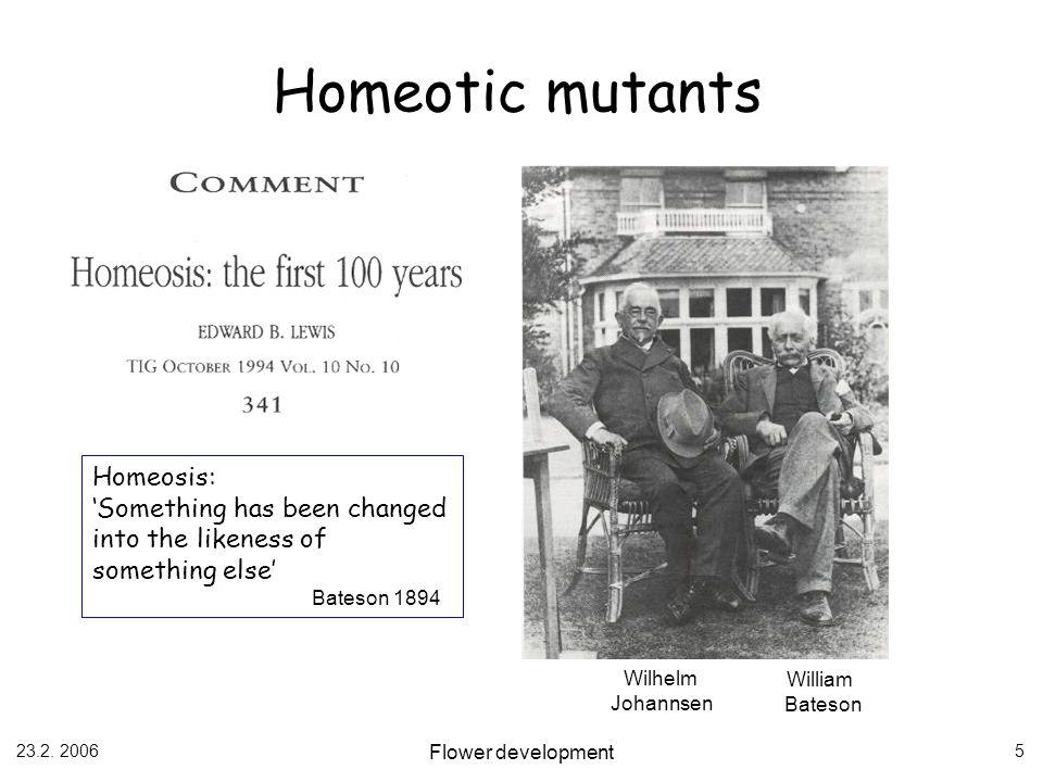 23.2. 2006 Flower development 5 Homeotic mutants Wilhelm Johannsen William Bateson Homeosis: Something has been changed into the likeness of something